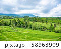 インドネシア バリ島 ジャティルイのライステラス 棚田 58963909