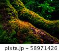 (京都府)竹の寺 地蔵院 竹林と苔 58971426