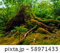 (京都府)竹の寺 地蔵院 竹林と苔 58971433