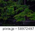 【京都】蓮華寺 新緑の庭園 58972497