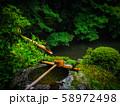 【京都】蓮華寺 新緑の庭園とつくばい 58972498