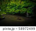 【京都】蓮華寺 新緑の庭園 58972499