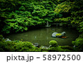 【京都】蓮華寺 新緑の庭園 58972500