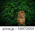 【京都】鈴虫寺 新緑 たぬきの置物 58972650