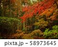 【鎌倉】報国寺の紅葉と竹林 58973645