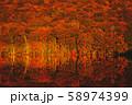 【青森】蔦沼の紅葉 リフレクション 58974399