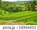 インドネシア バリ島 棚田 ライステラス 58994853