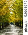 あづま公園のいちょう並木 福島 58994979