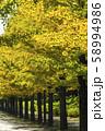 あづま公園のいちょう並木 福島 58994986