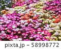 花畑 58998772