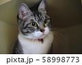 ななちゃん 58998773