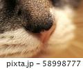 ななちゃん 58998777