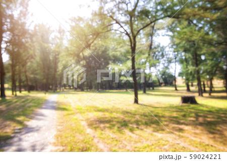 Blur park garden tree in nature background 59024221