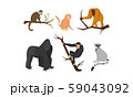 Different Species of Monkeys Sitting on Tree Branches Vector Set 59043092