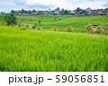 インドネシア バリ島 ジャティルイのライステラス 棚田 59056851