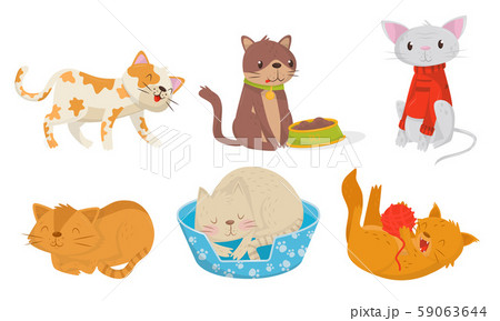 Cute Domestic Cats Eating and Sleeping Vector Set 59063644