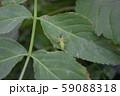 ワカバグモ 捕食 59088318