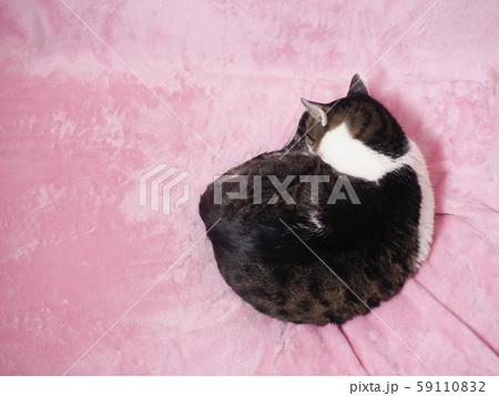 丸くなって眠る太った猫 59110832