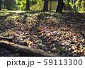 木漏れ日と落葉 59113300