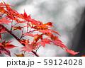 紅葉 もみじ 玉ボケ 高瀬渓谷 【長野県】 59124028