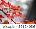 紅葉 もみじ 玉ボケ 高瀬渓谷 【長野県】 59124036