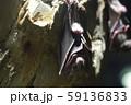 コウモリ 59136833