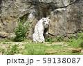 ホワイトタイガー 59138087
