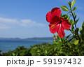 南国に咲くハイビスカス 59197432