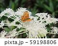 高原植物と生き物 59198806