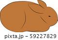 ウサギ 59227829