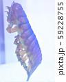 透明標本 59228755
