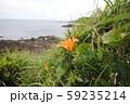 海岸に咲く南国風の花 59235214