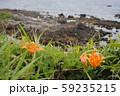 海岸に咲く南国風の花 59235215