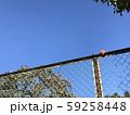 フェンスの上の熟した柿 59258448