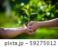 People holding young plant in hands against green 59275012