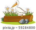 Isolated picture of pelican bird on log 59284800