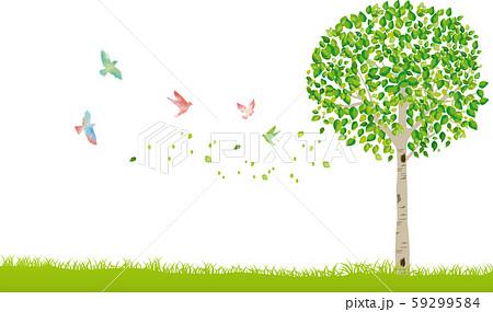 木:木 幹 枝 自然 緑 葉 新緑 新芽 初夏 夏 春 エコ グリーン 59299584