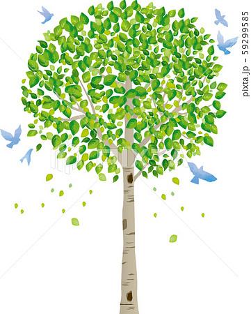 木:木 幹 枝 自然 緑 葉 新緑 新芽 初夏 夏 春 エコ グリーン 59299585