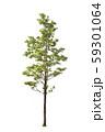isolated big tree on White Background. 59301064