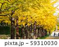 あづま総合運動公園のいちょう並木 福島県福島市 59310030