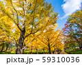 あづま総合運動公園のいちょう並木 福島県福島市 59310036