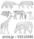 Sketch elephant bear zebra tiger giraffe turtle 59310986