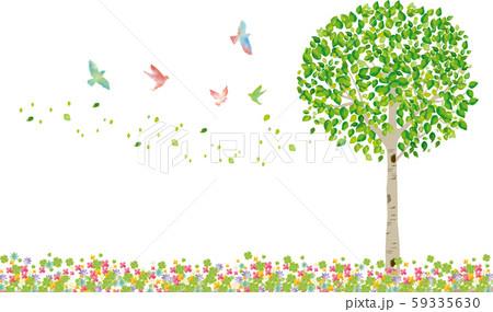 木:木 枝 自然 緑 葉 新緑 新芽 初夏 夏 春 エコ グリーン 59335630
