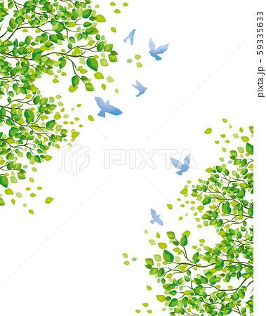 木:木 枝 自然 緑 葉 新緑 新芽 初夏 夏 春 エコ グリーン 59335633