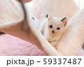 仔猫 生後4週間 保護猫 ハンモック 59337487
