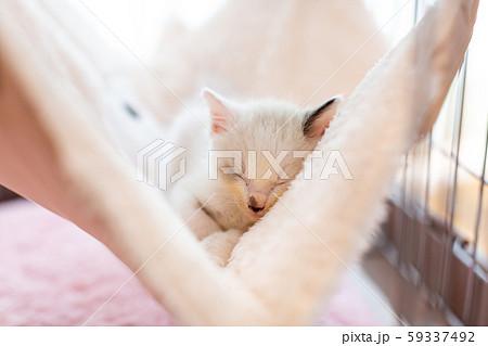 仔猫 生後4週間 保護猫 ハンモック 59337492