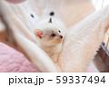 仔猫 生後4週間 保護猫 ハンモック 59337494