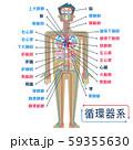 日本語で各部位の名称が記載された循環器系のシンプルなイラスト 59355630