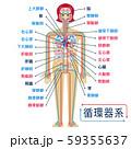 日本語で各部位の名称が記載された循環器系のシンプルなイラスト 59355637