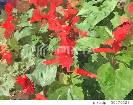 花の水彩イラストシリーズ 59370522